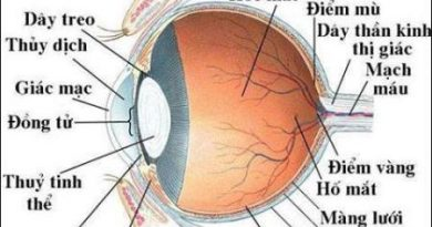Cấu tạo của mắt